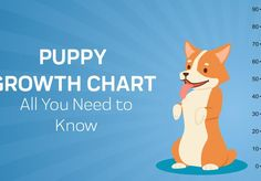 Puppy Growth Care