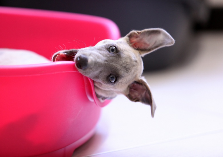 What You May Not Know Regarding Your Dogs Resting Behaviors