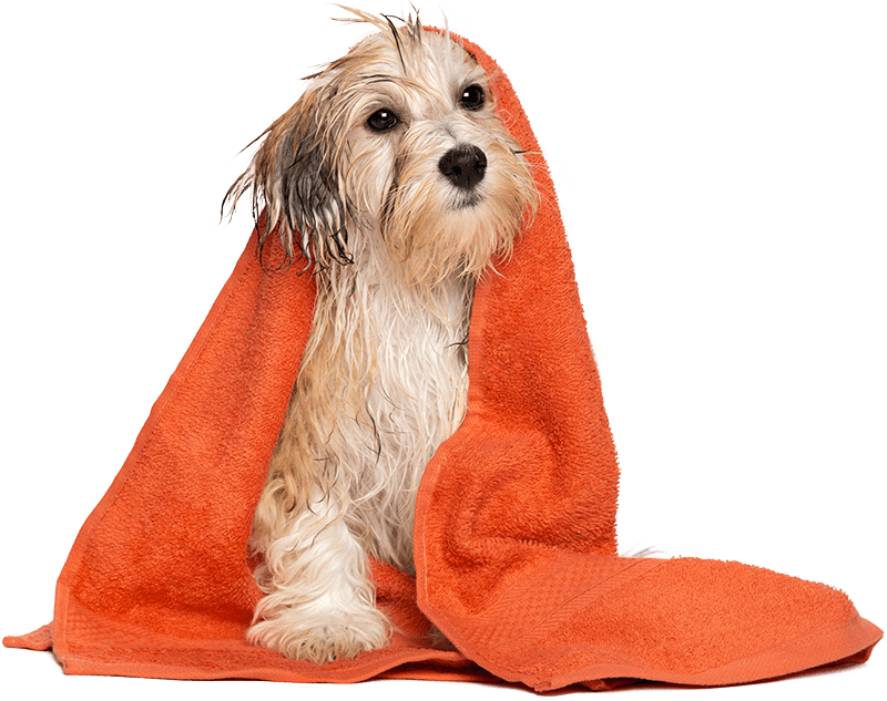 Dog Pet Supplies – What Do You Need To Know?